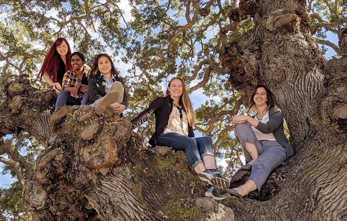 team members posing in an oak tree